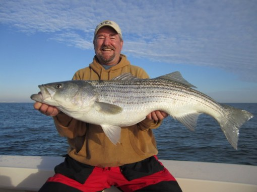 Ron Long hefts the last fish to come into my boat in 2012 - His 41-inch trophy striper