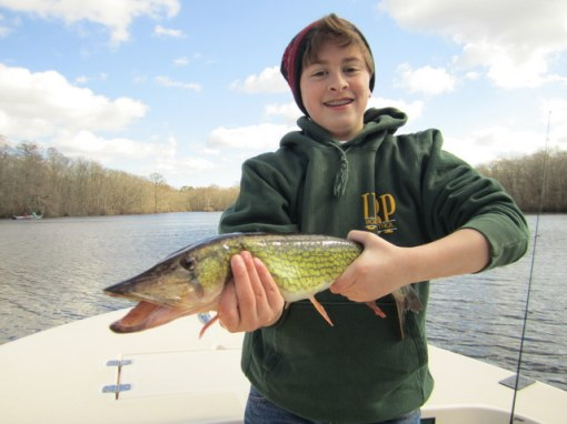 Connor Portner has his hands full with this fiesty 24-inch pickerel. Nice catch young man!
