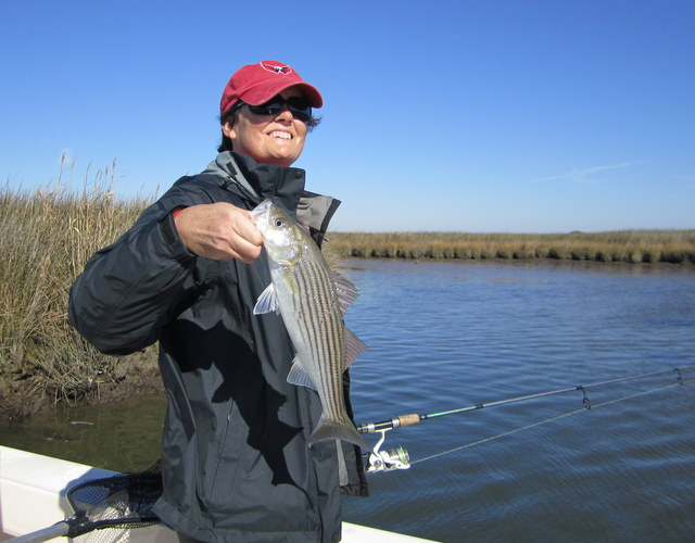 Striped bass josenhans fly fishing blog page 2 for Choptank river fishing report