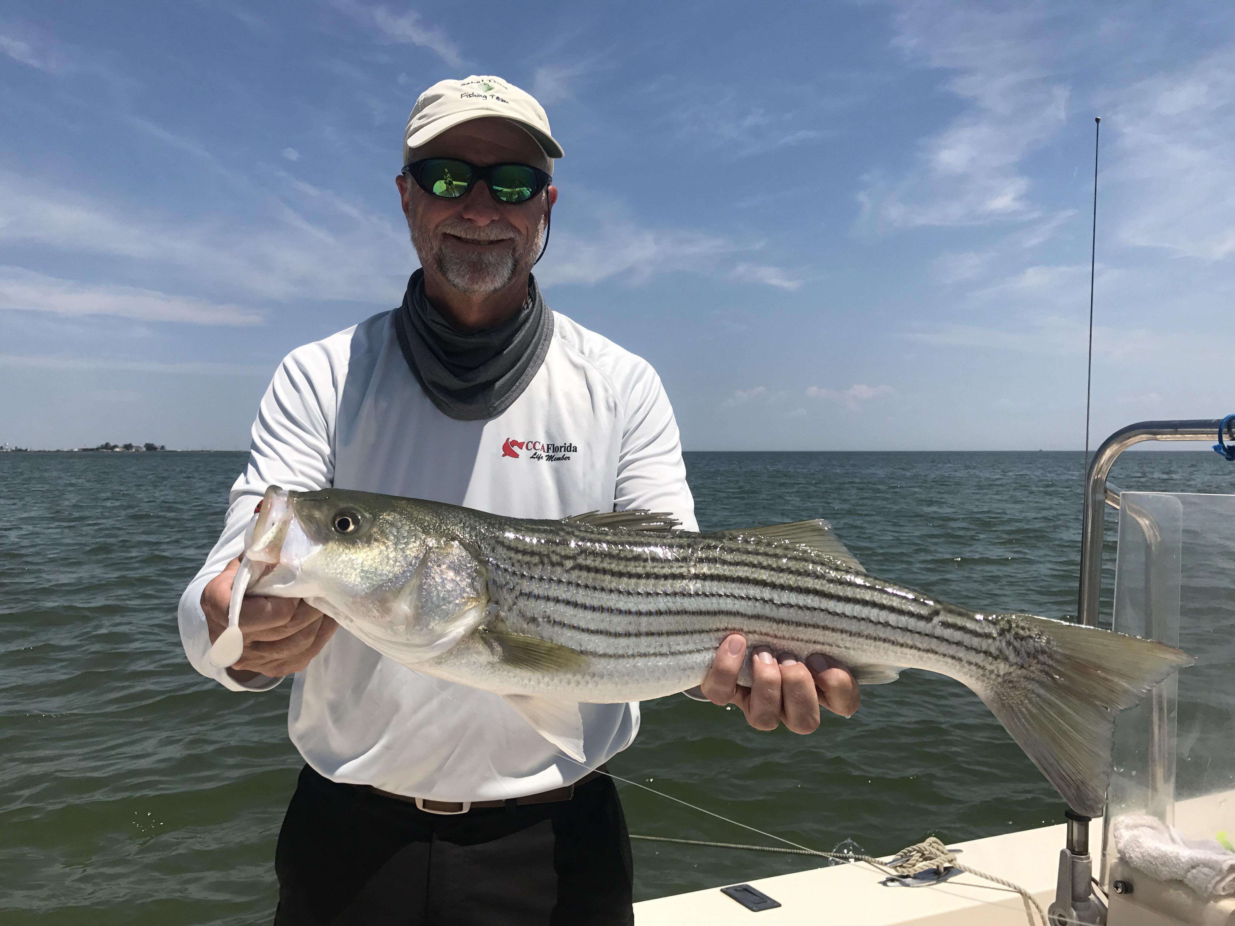 Josenhans fly fishing blog chesapeake bay fly and light for Chesapeake bay fish